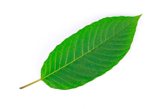 Green Vein