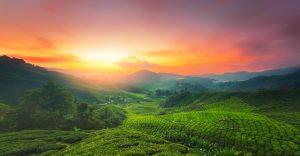 malaysian landscape sunset